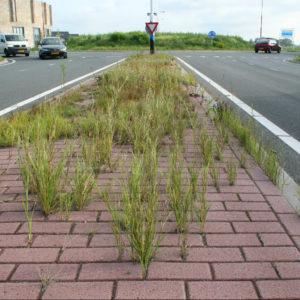 Biobased voegmortel voor onkruidvrij straatwerk